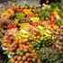 Tubo LED IP65, 18W, 120cm, Frutas y Verduras